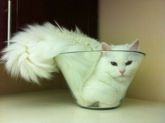"motomori-chan:Cats are liquid. ""Liquids … take the shape of the container while maintaining a constant volume"". That's it. So cats are liquid.I"