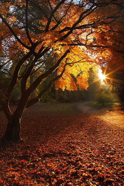 Autumnal glow by garykingphotography.com on Flickr.
