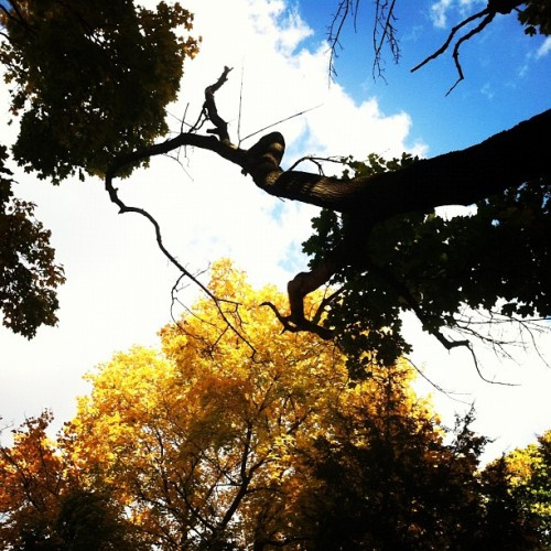 #fall #autumn #halloween #trees #colorful #yellow #orange #beautiful #nature #changing #colorwatch #pretty #outside #zoo (Taken with instagram)