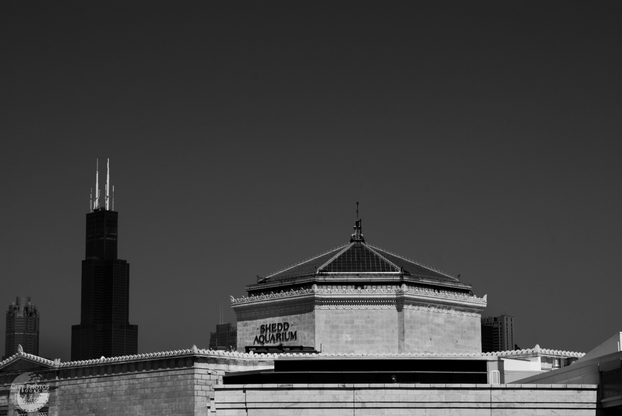 Shedd Aquarium and Willis Tower - Chicago