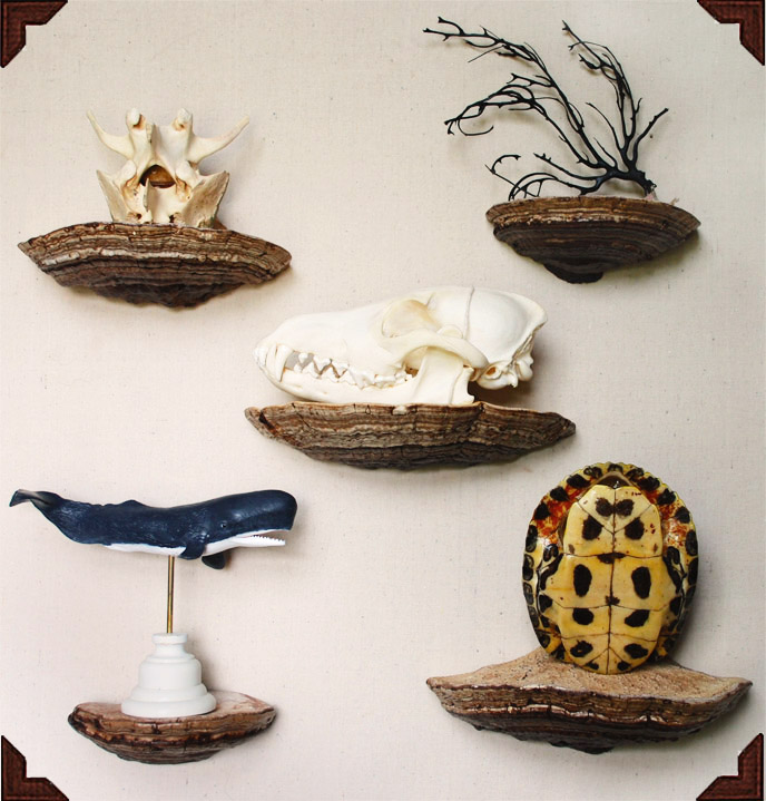Shelves made from actual mushrooms. View the How to.
