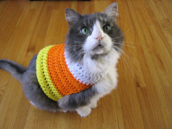 Last minute pet costume? Candy Corn Crochet Pet Sweater! Click HERE for the free pattern… (via DIY Maven)