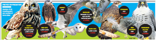 "Named and shamed: UK's worst place for killing birds of prey  Birds of prey including the peregrine falcon, red kite, goshawk and hen harrier are being poisoned or shot in the North York Moors and Yorkshire Dales at a rate unknown in any other region, according to the RSPB.  North Yorkshire has been named the UK's ""black spot"", with more crimes against birds of prey and owls reported in the last year than in north Scotland and Wales and all the counties of the south of England combined, found the charity's Bird Crime 2010 report, to be published on Thursday. Almost 10 per cent of the 117 incidents against 11 species last year took place in the county, which has consistently recorded high rates of such crime, according to the RSPB.  Click photo for more"