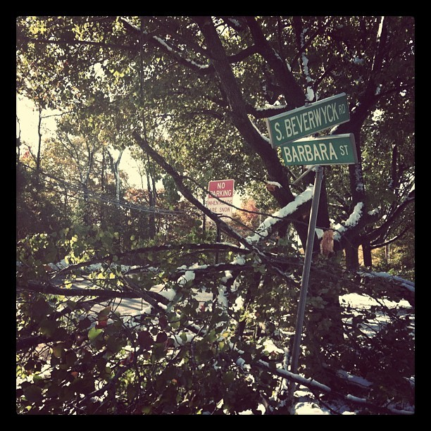This morning: Downed trees line my parents' whole block! #snow #october #trees #damage #newjersey #burbs (Taken with instagram)