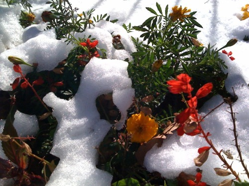 Snow fell on blooming flowers in NYC this weekend, luckily we had the October Tasting Box to warm us up!