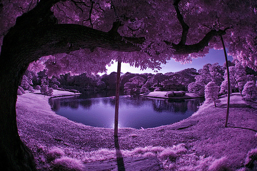 colour-planet:  love lavender? click here for the entire category on colour-planet ;)