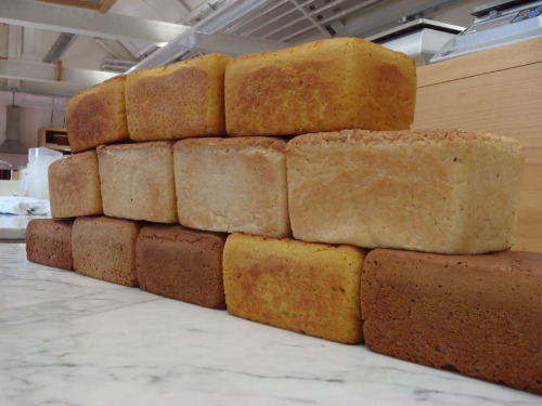 Bread or brick? experiments in baking with wheat flours, gluten free flours and pretty much everything in between Well it was an interesting week at school this week as not only did we have Jethro Marriage from Doves Farm to talk to us about flour, heritage grains and the milling process, but we also did a series of test bakes from all manner of different flours, wheat based and otherwise. I suppose I should preface all this with a brief re-cap of what I got up to last week at school, as I have not been to active on the old blog front of late, too much home brew probably but more of that in another post. Last week, my fellow baking students and I had a very informative talk by and with Andrew Whitley about the past present and future of bread. For those of you who don't know Andrew Whitley, he is the author of the fascinating and informative book called: Bread Matters. You don't have to be a foody to enjoy this and I would recommend it to anyone who has ever eaten bread in any form, it is a real eye opener to say the least. Andrew's talk was a very in-depth discussion on the state of modern bread and his depth of knowledge is rivaled only by his passion to inform, and to make bread of course! Following this day we made two seperate day trips to flour mills, on Thursday we headed to the local mill, Smiths in Worksop, followed on the Friday by Yorkshire Organic Mill. The two mills could not have been any more different if they tried, Smiths, a large (all be it relatively small by the real big boys standard) factory roller mill that can put out around thirteen tons of flour per hour and produces over a hundred different types of flour for purposes as diverse as bread making (of course) and the explosives industry! It was a real eye opener to see this kind of mill in action. I am sure we all have romanticized images in our heads of flourmills and their millers being coated head to toe in white flour dust but that just isn't the case. While there are plenty of people that work there, the mill itself is run by only three millers who work a shift rotation, the entire operation is computer controlled and can be run remotely with no one on site. Yorkshire Organic stone mill on the other hand is pretty much the complete opposite, a true artisan operation. It is located on a small organic family farm and producing about 100 tonnes a year of grain and all the grain milled there is not only organic, but also from Yorkshire, a tall order to say the least. But the flour is very good indeed, so good in fact that I brought home nearly twenty kilo's of it, I bought a sack of their 85% extraction white and a couple of small bags of dark rye. It was a great day where we not only got to see the three stone mills, Tom Dick and Harry but we also got to see some of the farm and the first crop of organic rye that had been planted just two weeks previous, we got a fab lunch of local breads from the flour milled there, some amazing cheese's and top notch soup. Perfect. So armed with all this flour and milling knowledge It was time to meet Jethro and talk about some heritage grains such as Emmer, Einkorn and kamut (khoransan), and well a little more about flour and milling too. After all this talking and learning about different kinds of flour we figured it was probably time to do a little baking and see what the differences actually were, so a series of test bakes proceeded over the course of the next couple of days to find out what it was all about. We baked with, and I warn you that I am liable to miss few here as we did do a lot, a selection of organic and non-organic bread flours white and brown, some available from your local supermarkets and some not, cake flour, Einkorn, Kamut, White Spelt, Wholemeal Spelt, Light Rye, Dark Ryes, Cracked Rye, Semolina, Barley, Coarse Oatmeal, Medium Oatmeal, Rice flour, Maize flour, Buckwheat flour, Polenta, Gram Flour, and Teff!  So what were they like, well varied to say the least, of the supermarket flours most were ok, how ever we did notice that pretty much all the white breads made from the supermarket flours did seem to taste quite salty.  I would probably recommend knocking at least half a percent (if not more) of salt off your formulas if you are using such flours. I think the Tesco's organic whole meal and the Doves Farms Heritage were the favorites, but I really liked the Einkorn bread made from Doves farm flour, which I think is available from Sainsbury's. For the wheat free flours there were some interesting results, the bread made from 100% cracked rye, was incredibly tasty and moist, but because there basically wasn't any flour in it it didn't really hold together so I think with the addition of some rye flour (and some sour) this could be a winner…watch this space for Volkornbrot. The whole spelt and the barley were also good, but the one made from medium oatmeal was really incredible, it was like porridge bread. I realize that this probably wont appeal to all but I loved it, it is really hearty and would go great with a soup or some strong cheese, and I would image toasted for breakfast with lashing of nuttella and chopped bananas. Now the real eye opener of all test bakes was the gluten free flours. Bearing in mind that these tests were not about making perfect bread but more about gaining a more fundamental understanding of how different flours react and work in the bread making process, how they bake and most importantly…how they taste. And I can tell you quite categorically, the 100% maize flour makes the most horrible and bitter tasting bread that you have ever tasted, which is in stark contrast to the polenta, which is really quite tasty, it's taste, surprisingly enough, was very much like polenta. I would suggest that with the addition of a few herbs and some garlic you could have a really tasty gluten free loaf. The rice flour loaf looked really good and tasted ok at first but had a fairly astringent after taste. The buckwheat was nice but quite intense, buckwheat is something you have to have a taste for in the first place, which I do, I'm quite partial to buckwheat pancakes, but I still found it a little difficult to deal with that much flavour. The teff, which is a grain very new to me was again really quite good but I feel a bit of an acquired taste. And finally (I think) the gram flour bread. I love chickpeas and anything to do with them, in fact my favourite breakfast off all time is channa massala and maybe a couple of samosa's too, so I was expecting to like this very much. And it was good, but not quite what I was expecting, there was a definite taste of chic peas but it had a very drying effect in the mouth and would really benefit from some extra moisture and again some more flavours.  The result of all these test bakes has really intrigued and inspired me, especially so with the gluten free one. While I am not gluten free myself, I can only imagine how much it would affect me, a self confessed bread–a-holic to find out that I could no longer eat traditional bread and feel that there really should be more done to satisfy the appetites of the increasing numbers celiac's diagnosed each year. And with the understanding gained of the taste and textures offered by these gluten free flours I really feel quite empowered do start making so more diverse and interesting gluten free breads, the first that comes to mind for me is curry bread! Any takers?