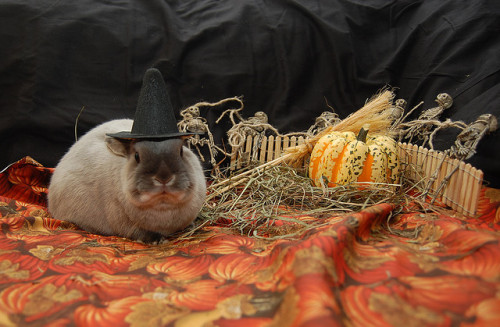 itsjenniferaniston:  Halloween Billy. :)  Eeee! Bunny in costume - I now know what to look for today in my search for cute bunny pix :D