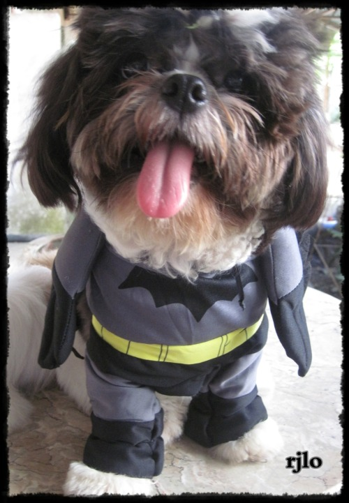 Grimlock as Batdog.. :)  Happy Halloween everyone! :)