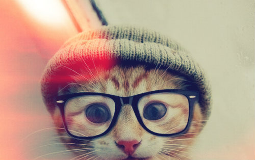theycallherwatsername:  le-hipster cat. I wantz