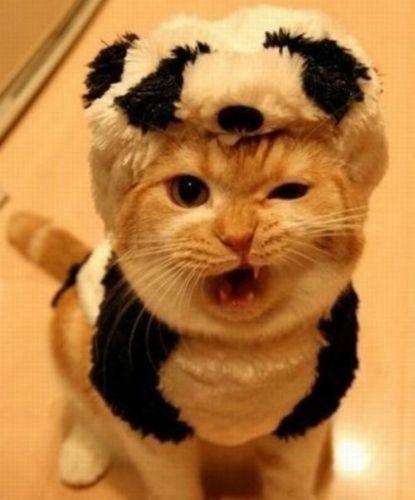 A Panda with Attitude