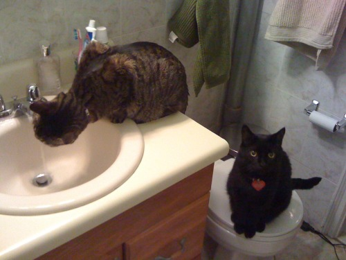 get out of there cats. that is not a kitty drinking fountain. good for you for waiting in line patiently though.