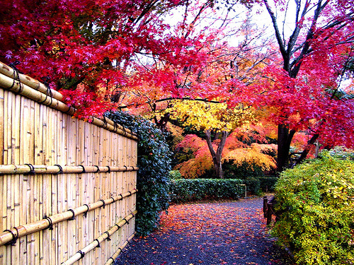 Japanese Autumn.