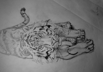 Tiger Sketch  by Lordiclaire Lovie based on a photo 2008