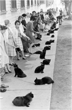 anthropologie:  Casting call for black cats, 1961.    Image via: The Constant Buzz