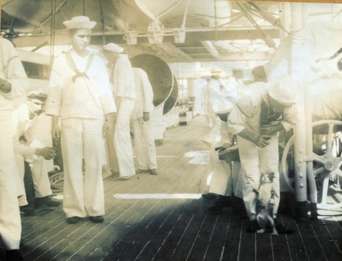 petsincollections:  Teaching a cat a trick aboard the cruiser Olympia, circa 1898. Photograph from the Littlejohn collection at J. Welles Henderson Archives & Library, Independence Seaport Museum. http://www.phillyseaport.org/Museum_Library.shtml