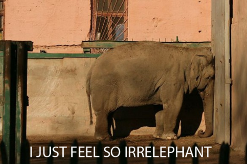 epic4chan:  iz kyoot:  this picture is irrelephant  画   Awwww!