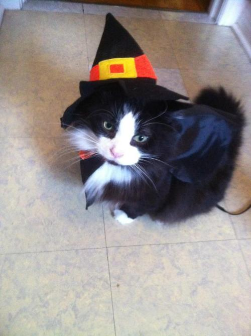 getoutoftherecat:  Witch cat will put a spell on you.