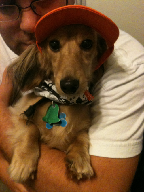 Harry all decked out in his Halloweenie attire!