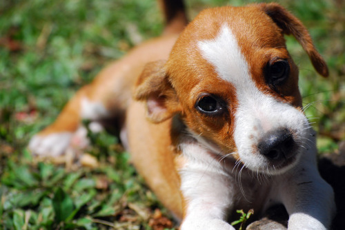 This pup is possibly one of the cutest puppies in the world.  Just don't tell all the other puppies.  (via)