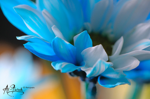 Blue Flower on Flickr.Blue.. The Color of my Dream..