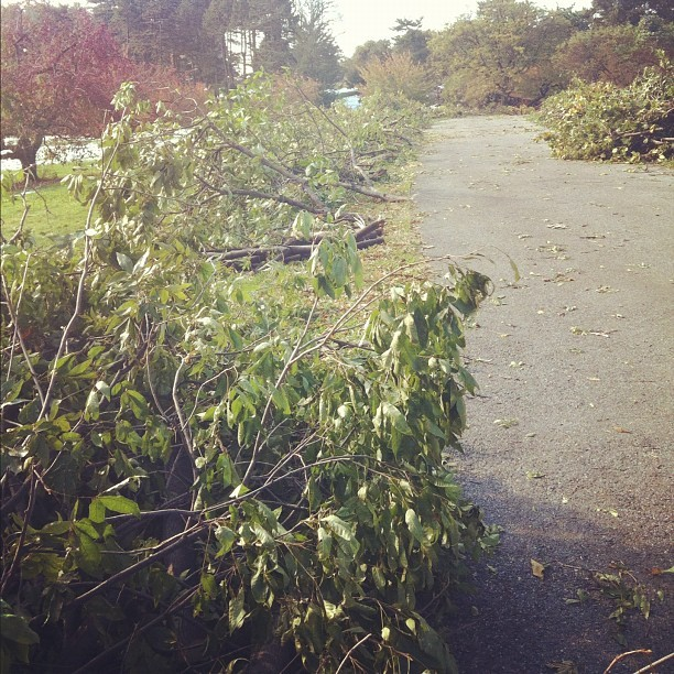 mostlymuseum:  Debris from the storm. We were hit hard, unfortunately. On a positive note, I am now able to collect interesting treetop specimens for the kids to explore. (Taken with Instagram at New York Botanical Garden)