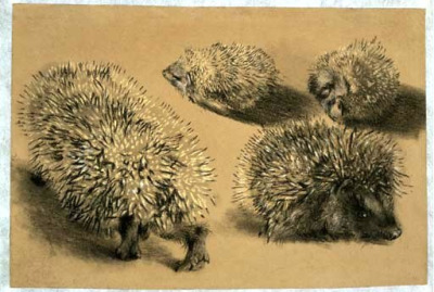 Menzel, Adolf (1815-1905) - 1840-45 Four Studies of a Hedgehog (Christie's New York, 2005) by RasMarley on Flickr.Black chalk, pastel on light brown paper; 15.4 x 22.7 cm.