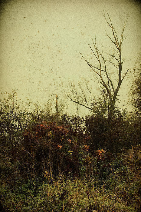 (via Autumn Mood Photograph by Mandy Tabatt - Autumn Mood Fine Art Prints and Posters for Sale)