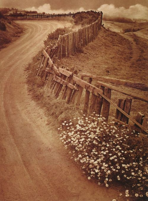 liquidnight:  Adolf Fassbender Daisy Trail, 1938 From After the Photo-Secession: American Pictorial Photography, 1910-1955
