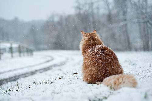 animalstalkinginallcaps:  I'LL WAIT FOR YOU, DARREN. I'LL WAIT FOREVER IF I HAVE TO. I WANT TO STAND WITH YOU ON A MOUNTAIN. I WANT TO BATHE WITH YOU IN THE SEA.  I WANT TO LAY LIKE THIS FOREVER, UNTIL THE SKY FALLS DOWN ON ME. … WHICH IT'S KIND OF DOING, I GUESS. I CAN'T REALLY FEEL MY FEET. SO I'M ACTUALLY GOING TO GO WATCH SOME HOUSE RERUNS AND DRINK COCOA UNTIL YOU GET BACK, BUT I STILL LOVE YOU. TRULY. MADLY. DEEPLY.