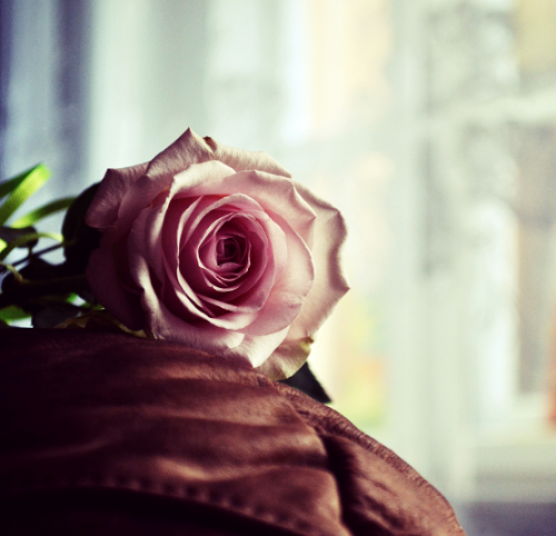 peanut-bitterness:  Rose.. by *matthewpoland