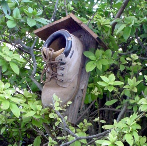 Working man's bird house, and a home to wrens. Practically speaking, this is just plain brilliant.