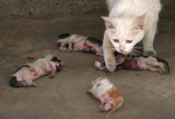 jemecoeure:  hey-erika:  The mother cat kept licking the kittens, hoping it would revive them. According to the family that adopted the stray cat, on the morning of the 11th when they heard the cat's tragic cries, they rushed downstairs to discover this stray cat's four kittens abused to death, and even placed in front of the mother cat. The kittens' bodies were covered with bullet holes, with blood all over. One of the kittens had its neck tied with a rope and elongated, its chest cut open, heart exposed, while the other three kittens' heads were stepped on.PLEASE REBLOG THIS PICTURE TO SHOW YOU'RE AGAINST ANIMAL ABUSE!  this just broke my motherfucking heart.