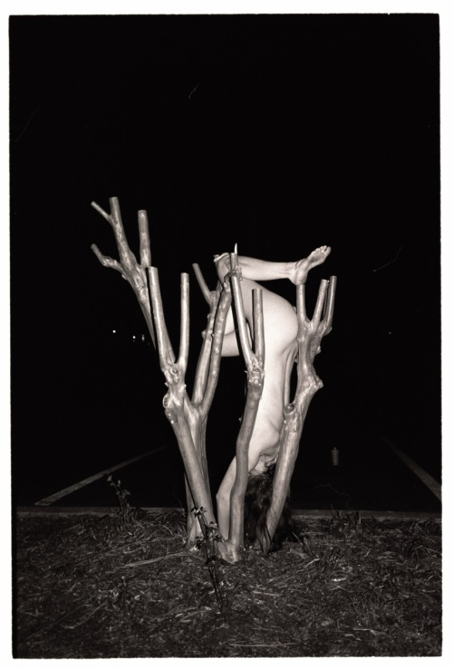 Crape Myrtle Legs 2011 Photo: Rachel Foley