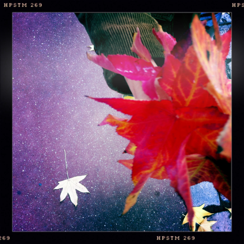 02 | Brique Feuilles-red/brown