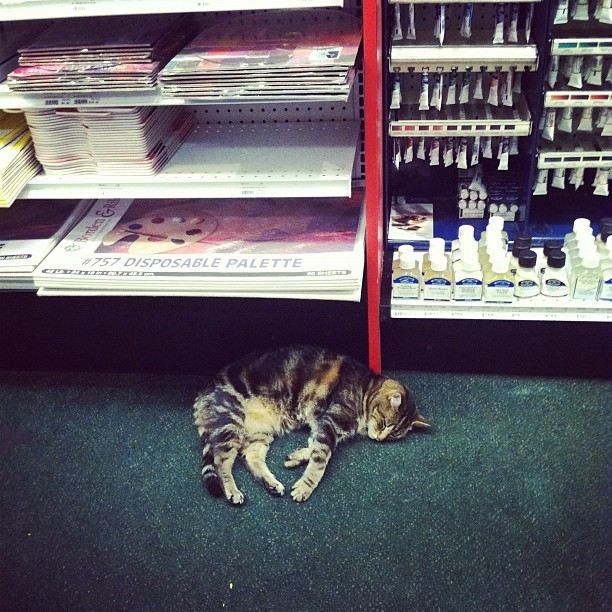 I love this cat. (Taken with Instagram at DaVinci Art Supply)