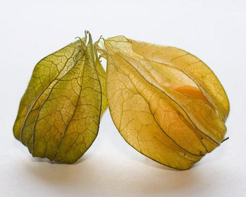 mothernaturenetwork:  Physalis fruits are encased in an unusual, lantern-like husk are part of the nightshade family and thus share a relation with the much more familiar tomato. Since it has a mild, refreshing acidity similar to the tomato, it can be used in many of the same ways. Imagine enjoying some pasta with fresh physalis sauce! Native to the Americas, they are typically imported from South America.15 fruits you've probably never heard of