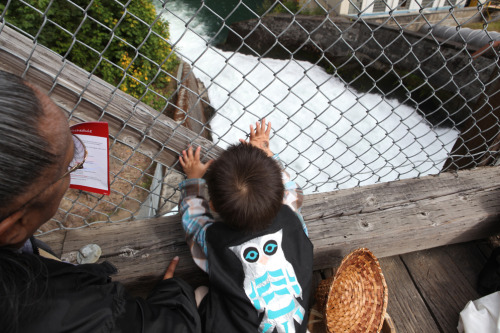 "Two-year-old Jordan Saluskin, a Lower Elwha Klallam tribal member, peaks over the edge of the Lower Elwha Dam during the ceremony to celebrate the removal of the dams. ""This is what it's all about,"" his mother Harmony Arakawa said. Photo by Katie Campbell."