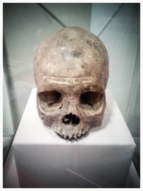 joshlawrencejazz:  Skull from the #ImagineAfrica gallery at the @pennmuseum (Taken with picplz.)
