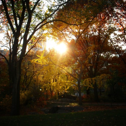 "Autumn sun through Central Park trees, New York City.  In Autumn sun drips down like melted gold on tree limbs decorated in the finest foliage.  The earth, chilled by the memory of winter, holds onto the sun's light with hands outstretched as each ray slips through its fingers like fine sand.   There is an entirely different quality to the air and sun in autumn and this is especially true in Central Park. The bitingly cool air pushes past flushed faces and every speck of sunlight provides only the smallest assurance of warmth. Dying embers of sun-specked leaves fall to the ground like ashes and creatures scurry in preparation for the long and arduous months ahead.   —-  View this photo larger and on black on my Google Plus page  —-  Buy ""Autumn Sunlight- Central Park - New York City"" Prints and Posters here, View my store, email me, or ask for help."
