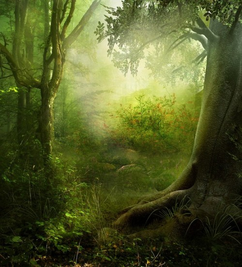 Magical forest (via Childlike Wonder)