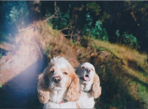 humannotbeing:  gaspar y copito on Flickr.
