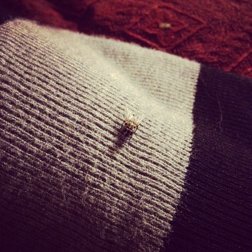 This fly has been pissing me off all week.  (Taken with instagram)