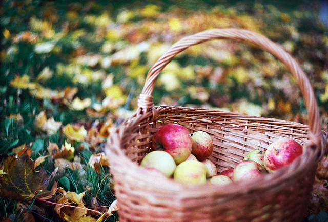 | ♕ |  apple harvest  | by © Liis Klammer