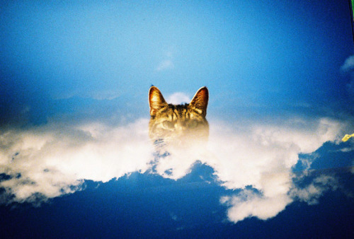 Arty in the Clouds by dazb  Would never usually re-blog a cat pic but there is something special about this.