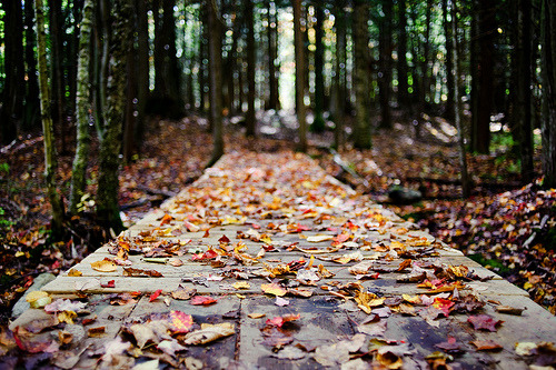 hellanne:  autumn (by shoothead)