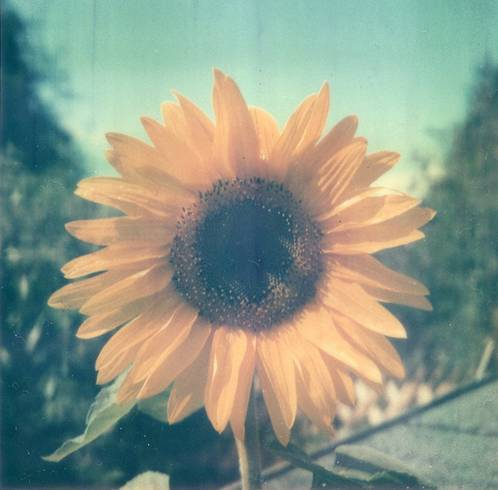 I love this, it's so pretty🌻