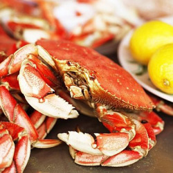 "December is ""Crab Fest"" at Pacific Catch   Check out these 10 things you should know about local Dungeness crab season.  'Tis the Season! A Primer on Dungeness CrabsOn the West Coast, the holidays aren't all about parties, roasts, and cookies; they're also about fresh, abundant Dungeness crabs, which are in peak supply during this time of year….keep reading"