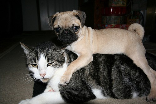 """This is how you make a dog pile, right?"""