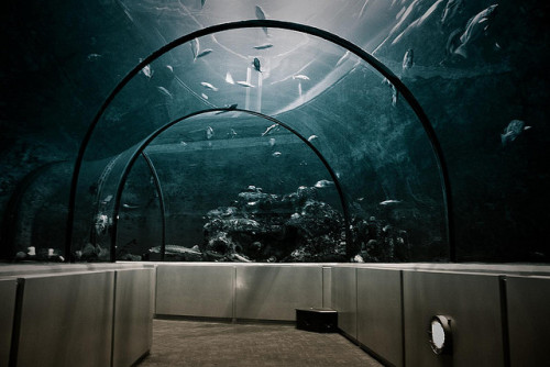 colouredpastel:  Aquarium by Luc Bernard on Flickr.